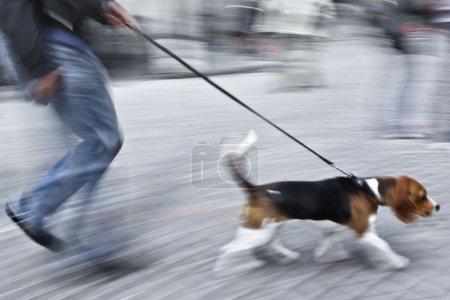 Photo pour Homme avec chien sur rue dans le flou de mouvement - image libre de droit