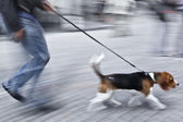 Man with dog on street