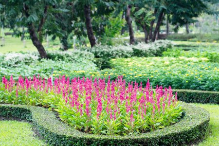 Parks Colourful Flowerbeds...