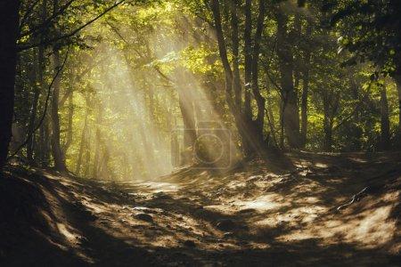 Photo pour Un chemin à travers une forêt magique. Rayons de soleil à travers les arbres - image libre de droit