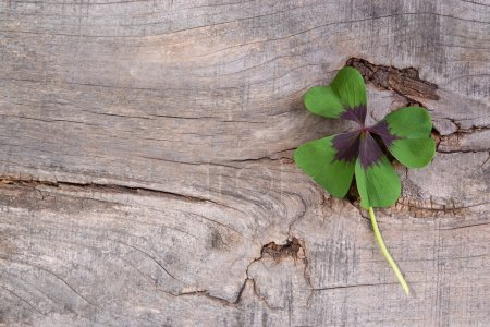 Photo for Moments of Happiness with shamrock - Royalty Free Image