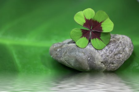 Photo for Close-up of four-leaf clover - Royalty Free Image