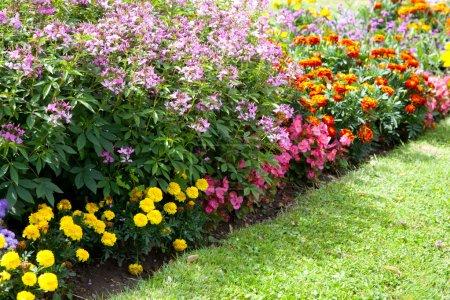 Flowers growing in the garden