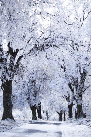 roads in the winter landscape