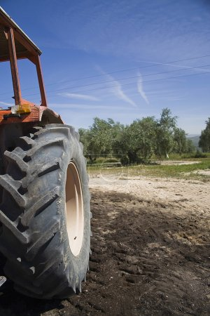 Tractor in the collection of olives in fields of Andalusia