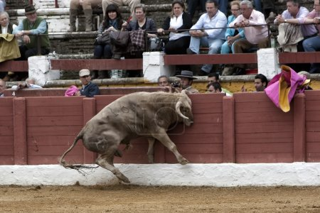 Bull about 650 Kg galloping in the sand right when I just got out of the bullpen, ramming with their head in the burladeros, people are terrified, Linares