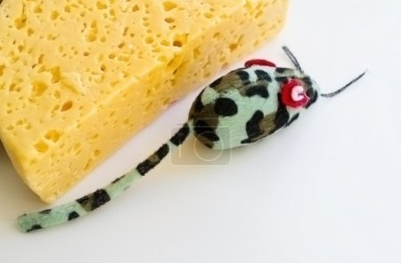 Photo for The most tasty cheese and the most cunning mouse - Royalty Free Image