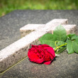 Single red rose on a tomb...