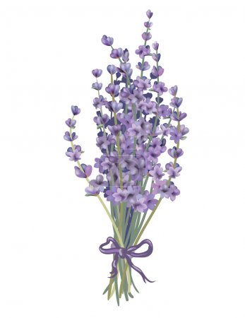 Illustration for Coloured lavender bouquet. Objects can be easily regrouped. Drawn with illustrator's brushes and gradient mesh. - Royalty Free Image