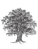 Black and white oak tree with leaves Drawn with illustrator's brushes