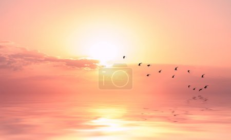beautiful sky on sunset or sunrise with flying birds to the sun,