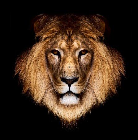 Photo pour Tête de lion - image libre de droit