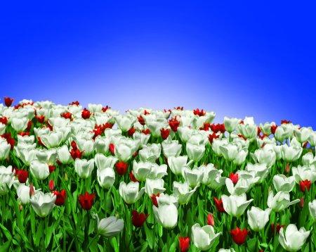 Photo pour Belles fleurs printanières - image libre de droit