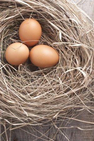 Photo pour Pousses macro d'œufs bruns au nid de foin dans une ferme de poulets - image libre de droit