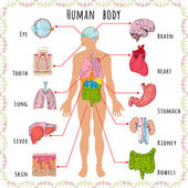 Human body medical infographics with person silhouette and organs vector illustration