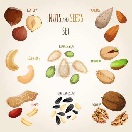 Illustration for Nuts and seeds mix decorative elements set vector illustration - Royalty Free Image