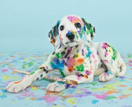 Photo for A silly little Dalmatian puppy that looks like he got into the art supplies, on a blue background. - Royalty Free Image