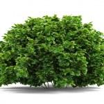 Plant bush isolated....