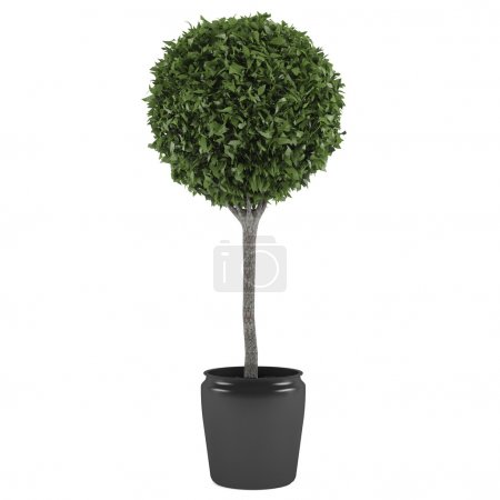Topiary tree pot