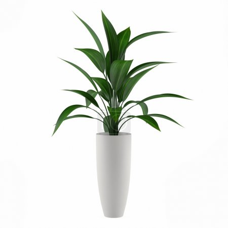 Photo for Plant isolated in the pot at the white background - Royalty Free Image