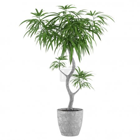 Decorative pot plant palm