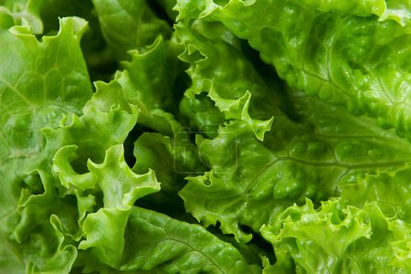 Photo for Lettuce background - Royalty Free Image