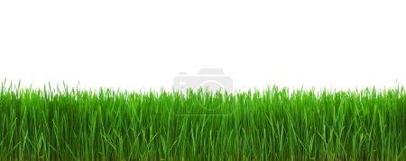 Photo pour Herbe isolée sur fond blanc avec chemin de coupe - image libre de droit