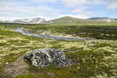 Tundra at Dovrefjell National Park, Norway