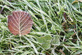 Frozen leaf and grass