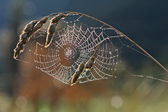 Spider web with dew against the light in Spain.