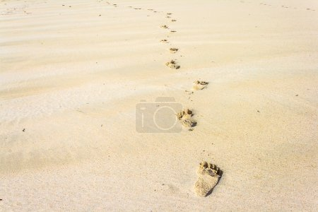 Photo for Footprints on the beach looking for the way - Royalty Free Image