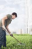 Man gardening green plants