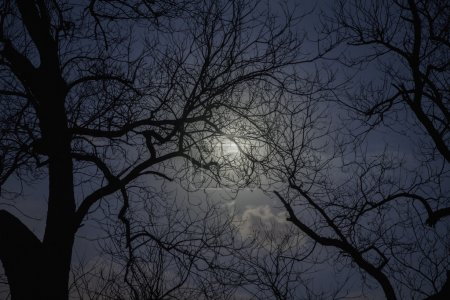 Silhouette of trees in the moonlight
