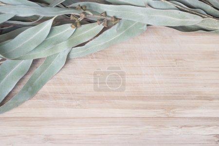 Photo pour Brindilles d'eucalyptus avec capsules posées sur une table en bois - image libre de droit