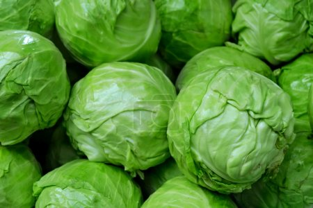 A lot of whole green cabbage