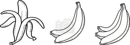 Illustration for Banana, vector illustration - Royalty Free Image