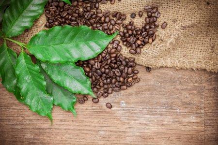 Photo pour Grains de café frais sur fond de bois - image libre de droit