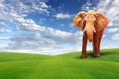Single elephant walking in grass field