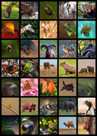Collage made of photos of different animals images...