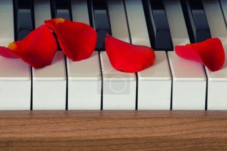 Photo pour Pétales de rose écarlates est couché sur le clavier de piano - image libre de droit