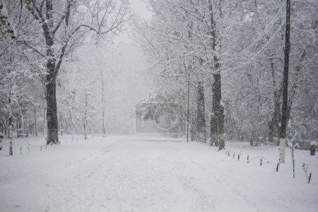 Photo pour Paysage de neige dans le parc - image libre de droit