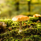 mushroom in sunlight