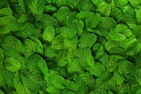 Photo for Close-up background fresh mint leaves. - Royalty Free Image
