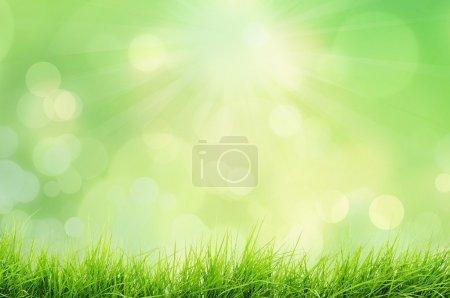 Photo pour Printemps ou été paysage naturel avec l'herbe et le bokeh de lumières - image libre de droit