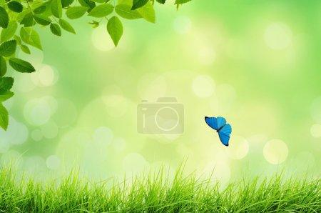 Photo pour Printemps ou été paysage naturel avec des lumières d'herbe et de bokeh - image libre de droit