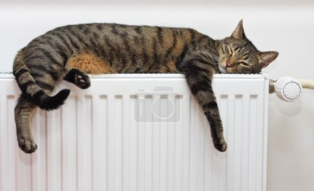 Cat relaxing on radiator