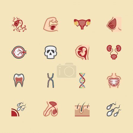 Body element vector color icon set2