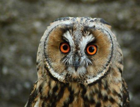 Photo pour Soirée de reproduction et de démonstrationDétails et portraits et autres oiseaux de proie dans la nature ou destinés à la chasse , - image libre de droit