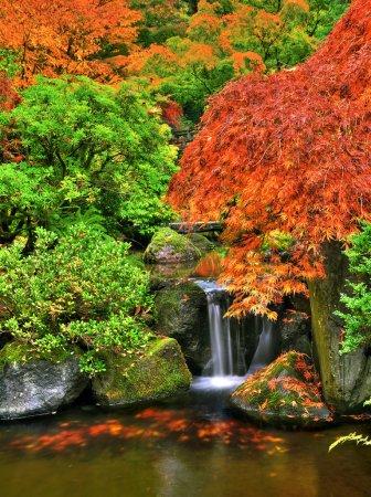 Photo pour Cascade d'un ruisseau coulant à travers la forêt colorée d'automne - image libre de droit