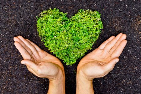Photo for Hands holding green heart shaped tree, tree arranged in a heart shape, love nature , save the world, heal the world, environmental preservation, planting tree - Royalty Free Image